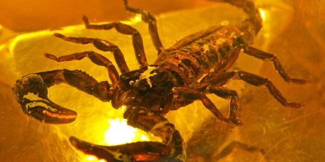 Nés sous le signe du scorpion